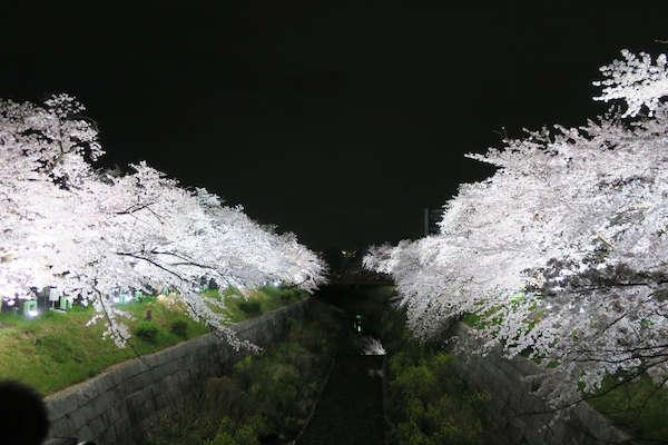 Image: 160403 山崎川の桜並木ライトアップ