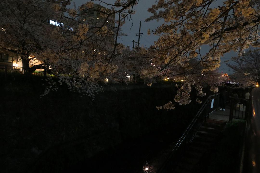 Image: 山崎川 桜並木 夜間